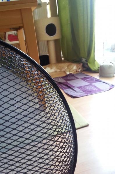 cat_hot02