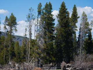 Yellowstone-05