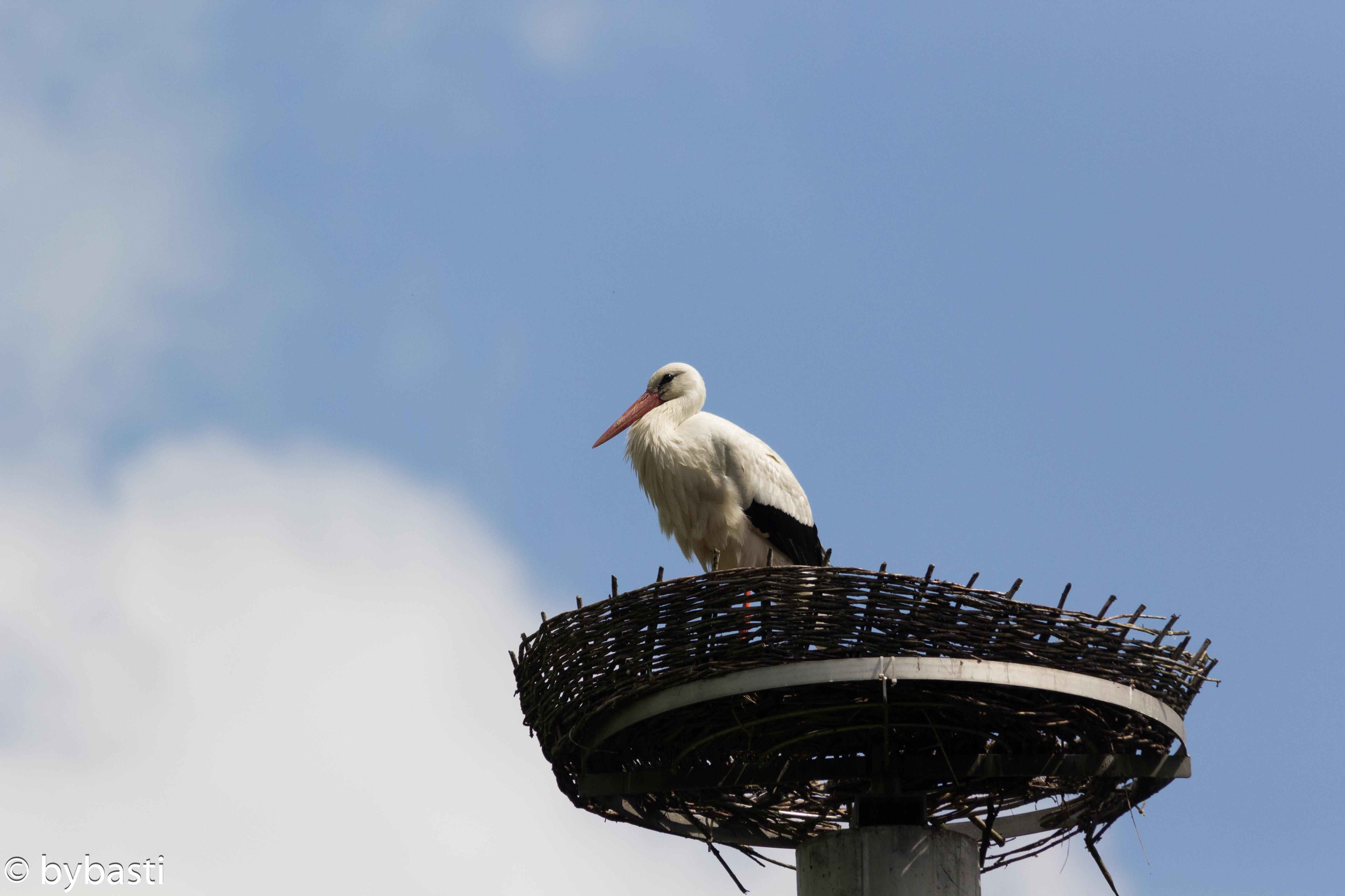 Storks _03