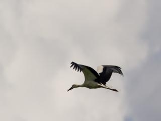 Storks _06