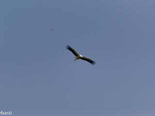 Storks _07