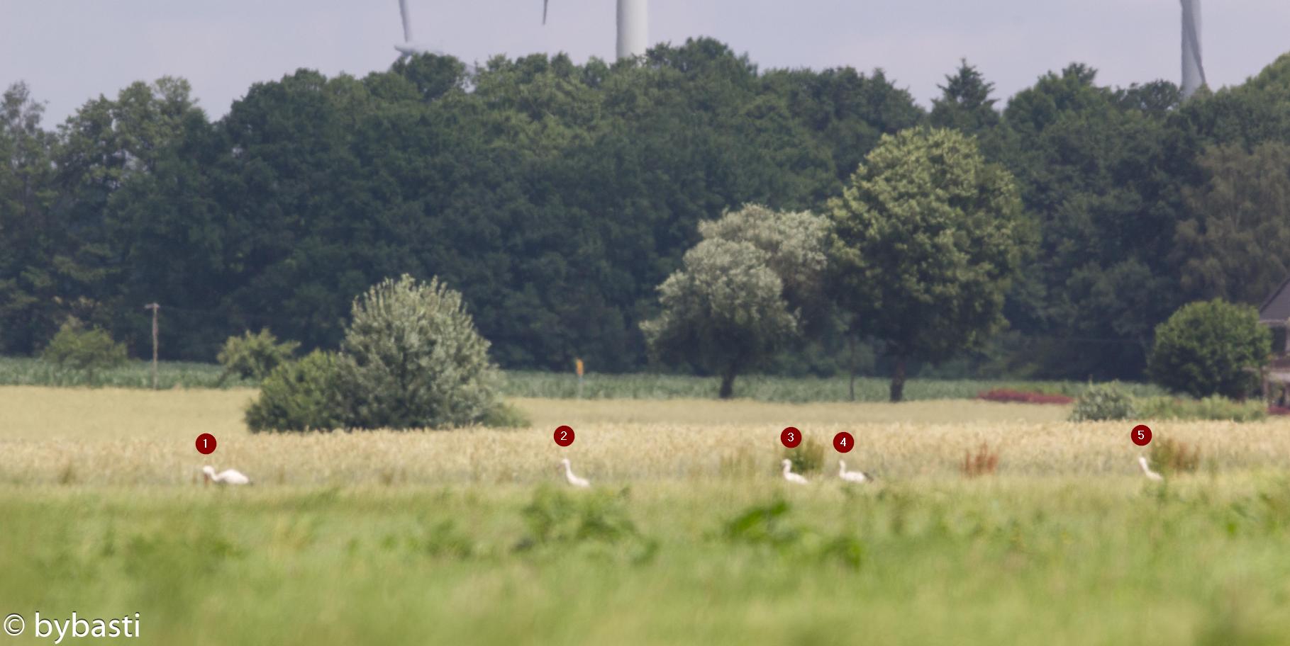 Storks _08