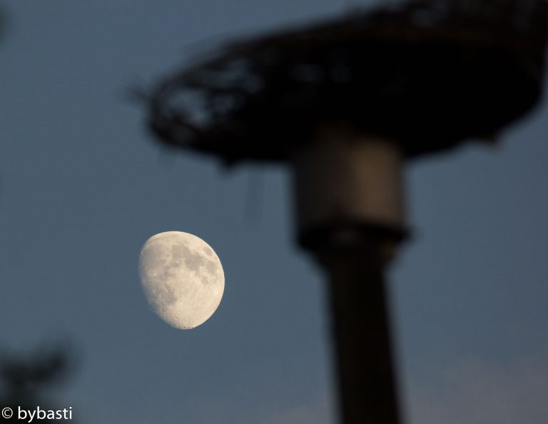 Moon 06