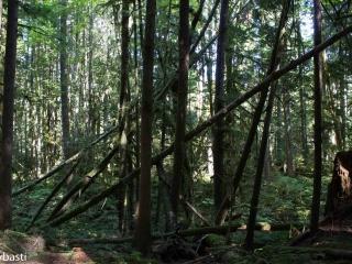 rainforest-005