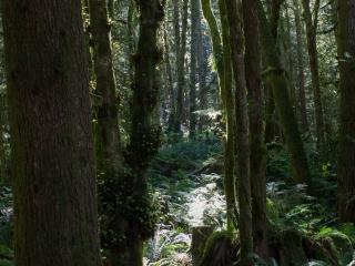 rainforest-009