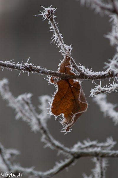 Photos of December- 006