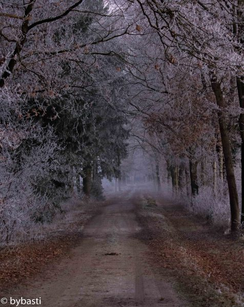 Photos of December- 014