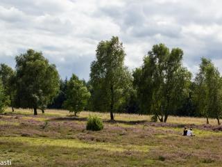 Heide 019