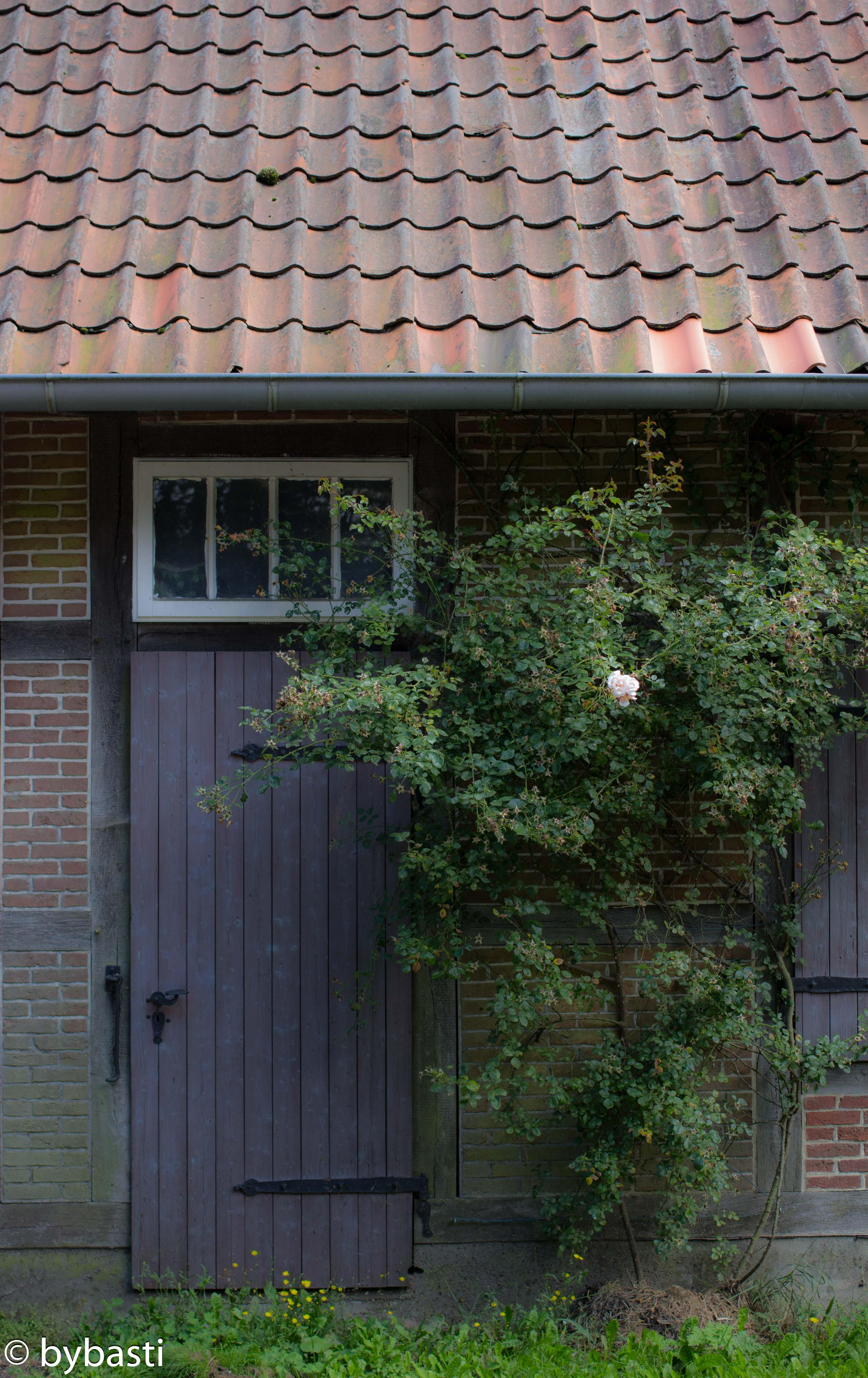 Heide 024