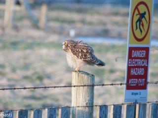Eule _ Owl 07