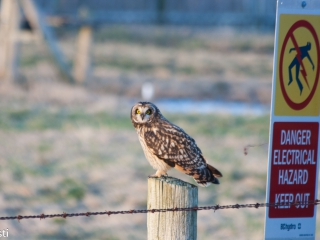 Eule _ Owl 08
