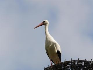 Storks _05