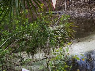Alligators - Alligatoren 006