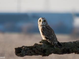 Eule _ Owl 06