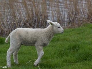 Friesland 14