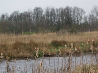 Friesland 15