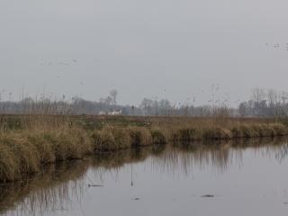Friesland 19